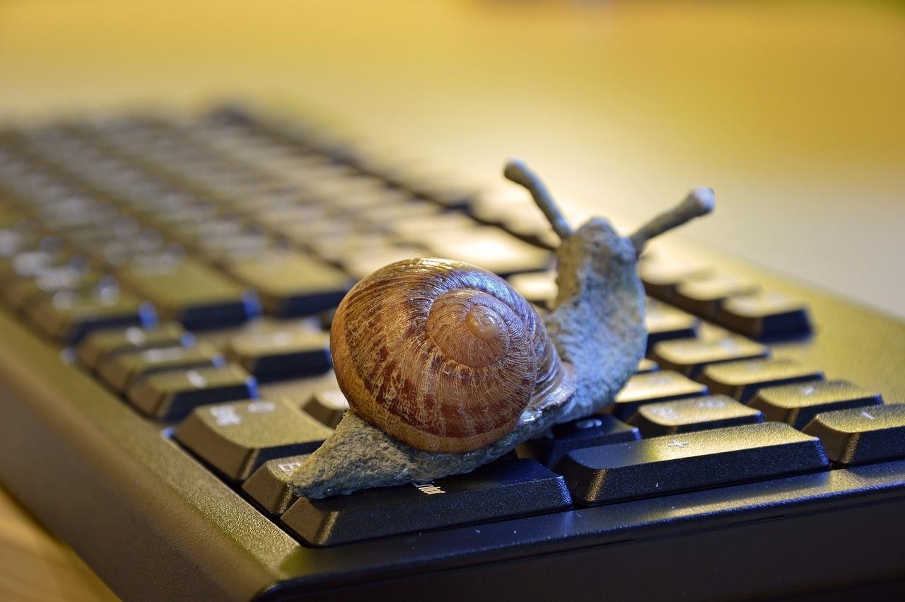 snail, shell, figure